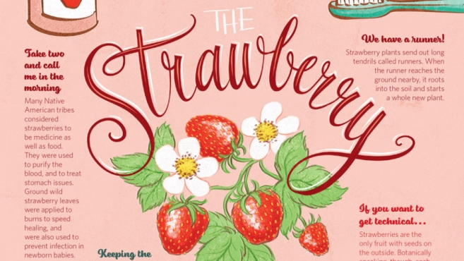 the strawberry infographic